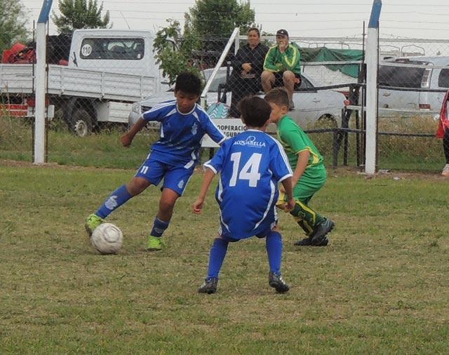 faisan2